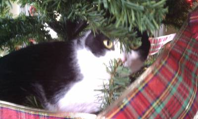 Schroeder in tree
